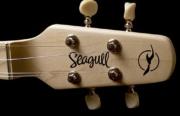 Seagull M4 Spruce02